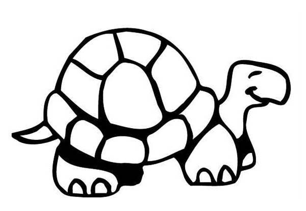 Turtle, : Happy Turtle is Smiling Coloring Page