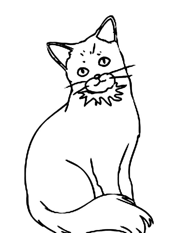 Cat, : How to Draw Cat Coloring Page