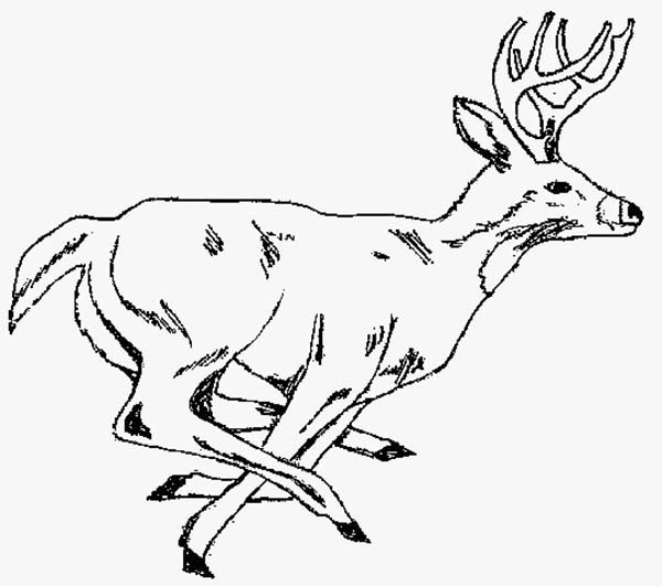 Deer, : Hunting Deer Coloring Page