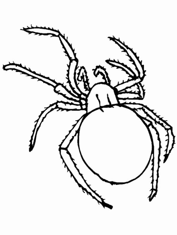 Bugs, : Insect Bugs Spider Coloring Page