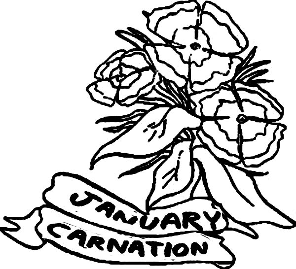 Carnation Flower, : Januari Carnation Flower Coloring Page