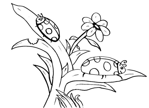 Bugs, : Ladybug is Species of Bugs Coloring Page