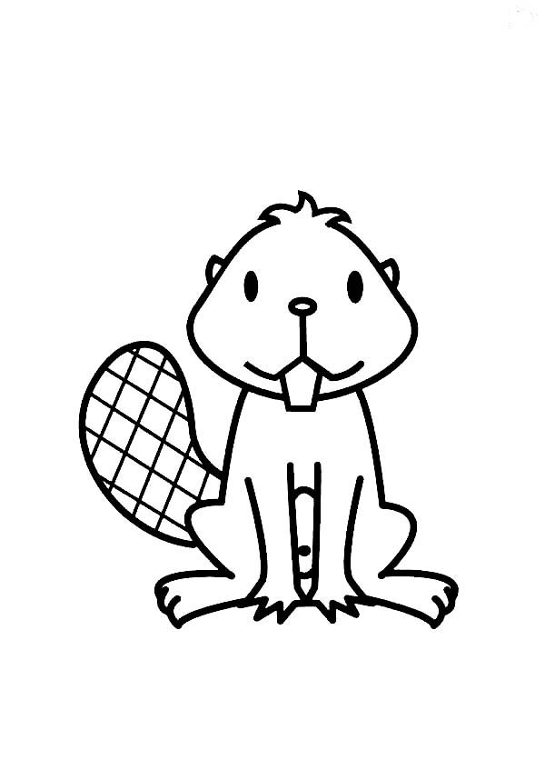 Beaver, : Little Beaver Coloring Page
