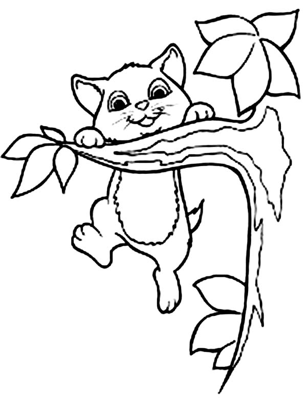 Cat, : Little Cat Climbing Tree Coloring Page