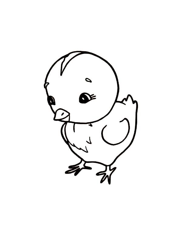 Chicken, : Little Chicken Coloring Page