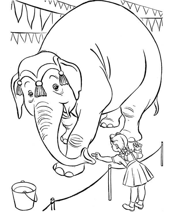 Circus, : Little Girl Feed an Circus Elephant Coloring Page