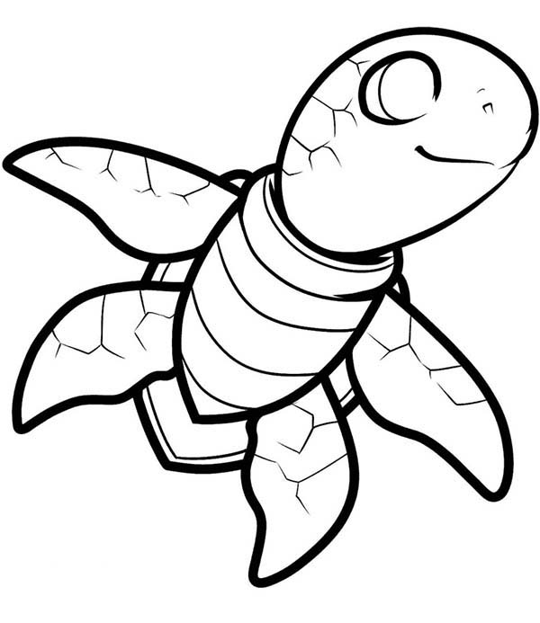 Turtle, : Little Sea Turtle Coloring Page