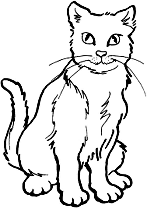 hard cat design coloring pages - photo#34