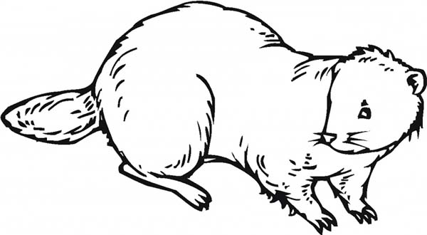 Beaver, : Nocturnal Animal Beaver Coloring Page