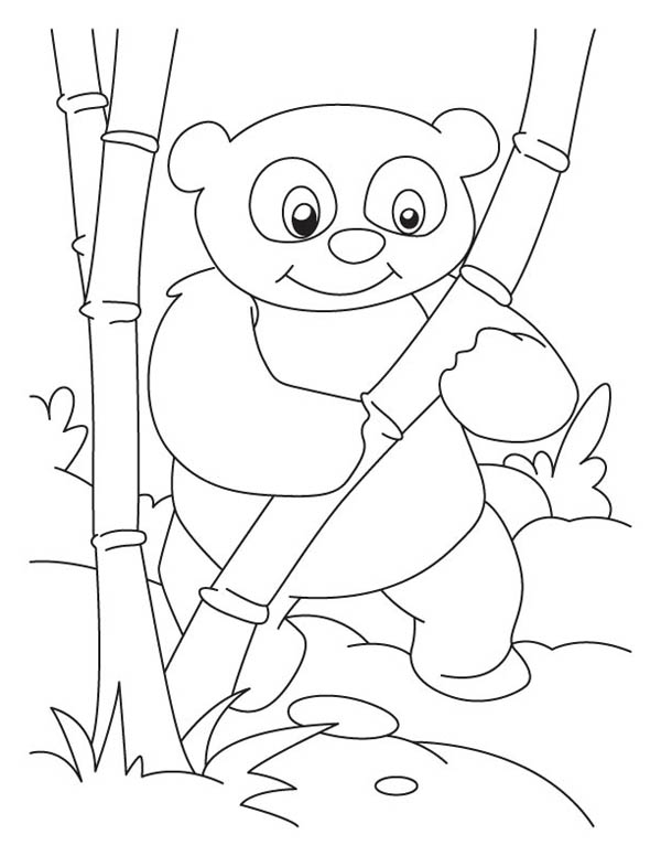 Panda, : Panda Found Bamboo to Eat Coloring Page