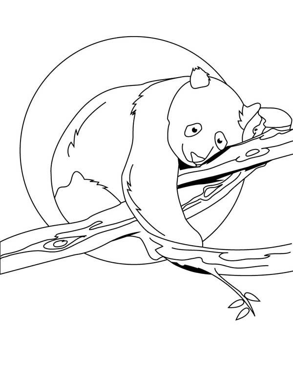 Panda, : Panda Sleeping on Tree Coloring Page