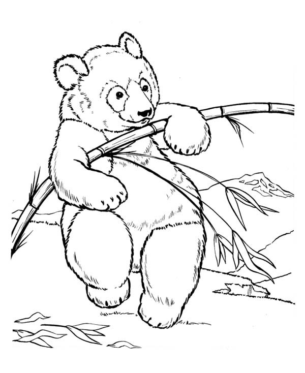 Panda, : Panda Try to Fracture Bamboo Coloring Page