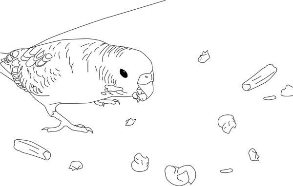 Parakeet, : Parakeet Eats Breadcrumb Coloring Page