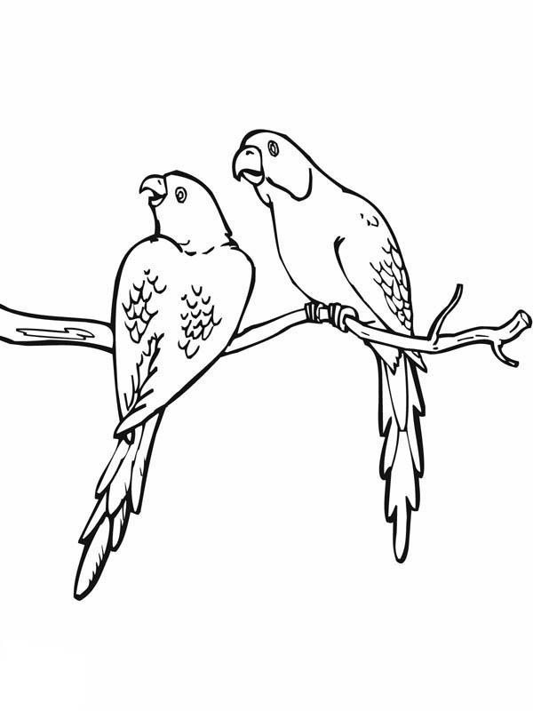 Parakeet, : Parakeet Mating Coloring Page
