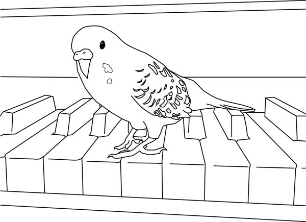 Parakeet, : Parakeet Playing Piano Coloring Page