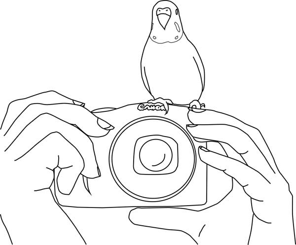Parakeet, : Parakeet Standing on Camera Coloring Page