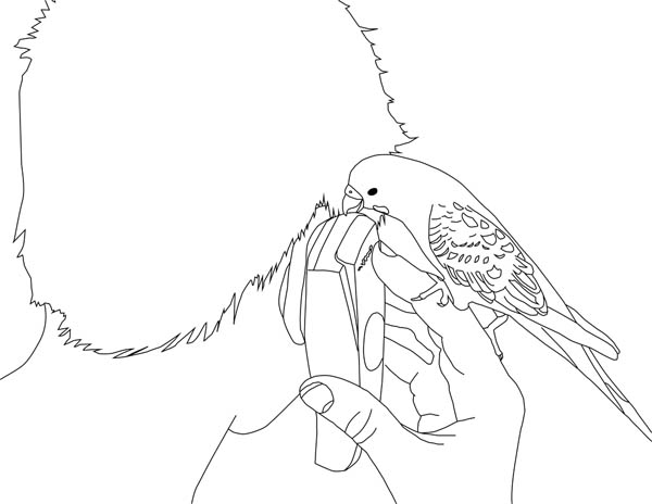 Parakeet, : Parakeet Talking on Cellphone Coloring Page