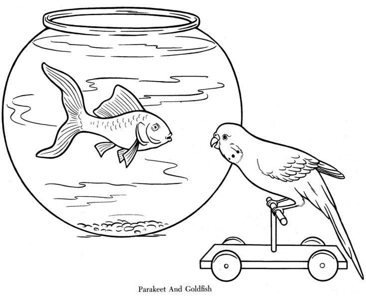 Parakeet And Goldfish Coloring Page