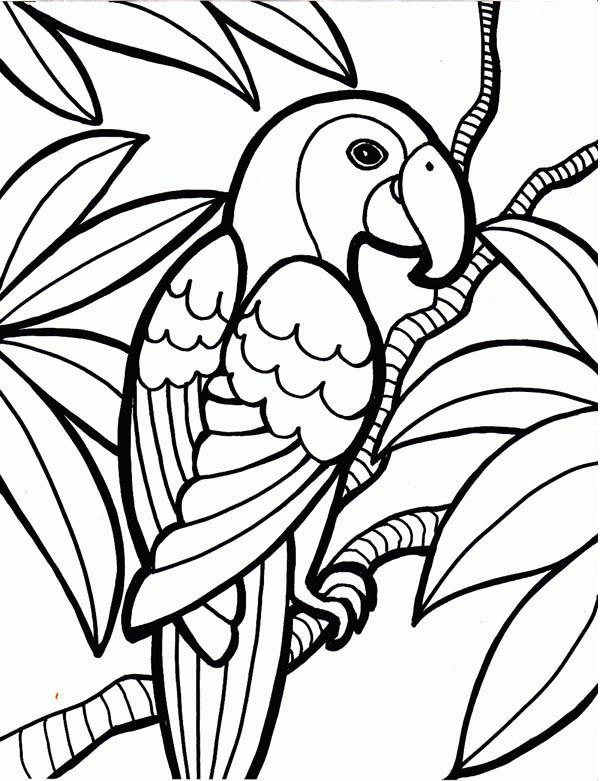 Parakeet, : Parakeet on Tree Branch Coloring Page