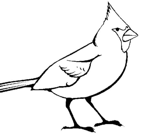 Cardinal Bird, : Picture of Cardinal Bird Coloring Page