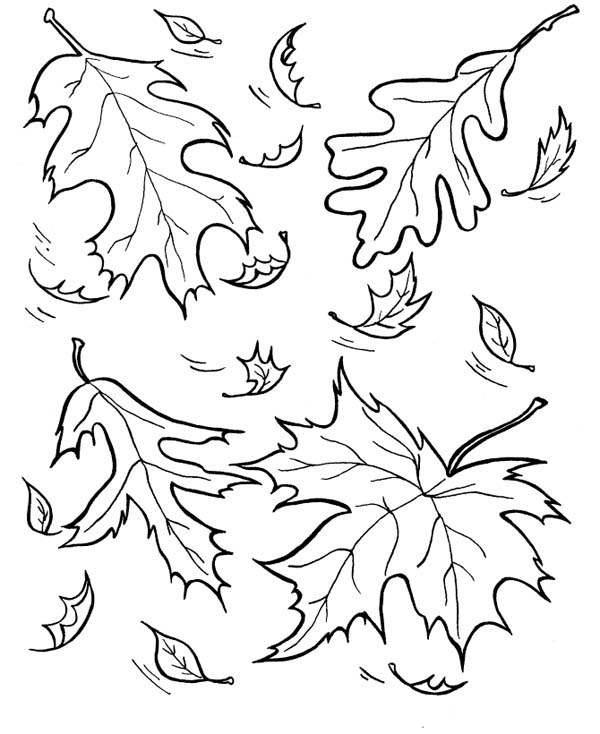 Autumn, : Picture of Leaves in Autumn Coloring Page