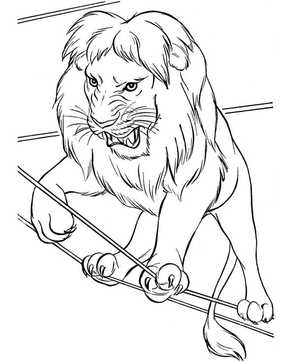Circus, : Picture of Lion Circus Coloring Page