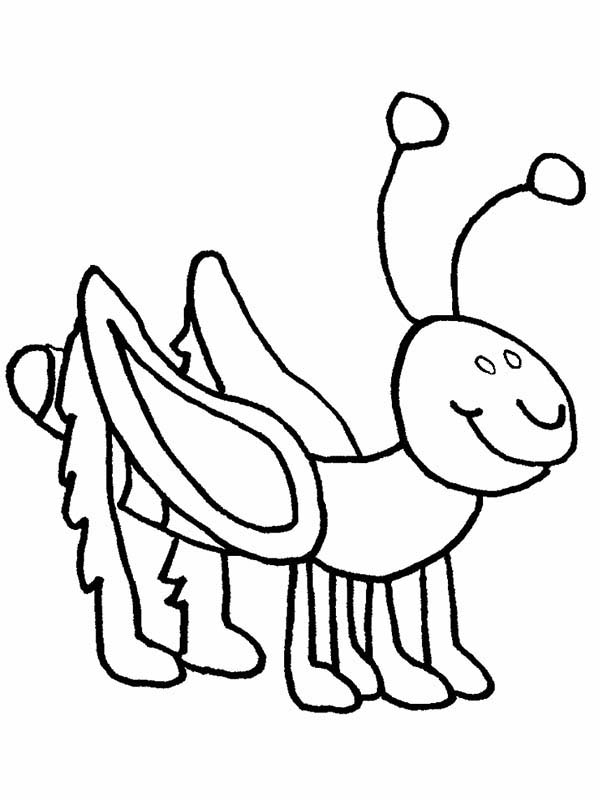 Bugs, : Picture of Species of Bugs Coloring Page