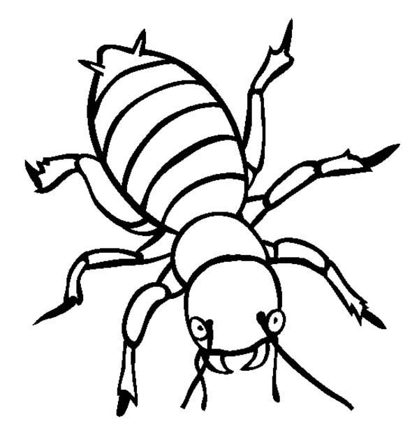 Bugs, : Potato Bugs Coloring Page