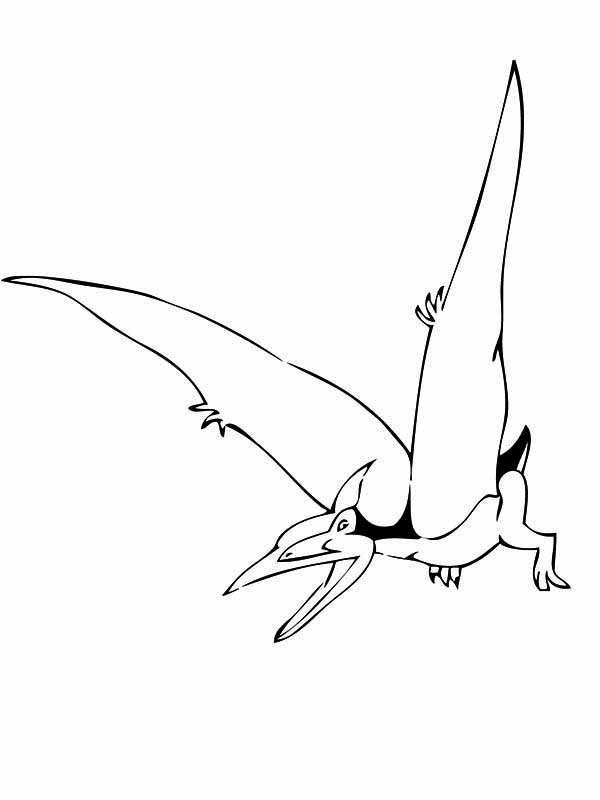 Pteranodon, : Pteranodon the Flyer Coloring Page