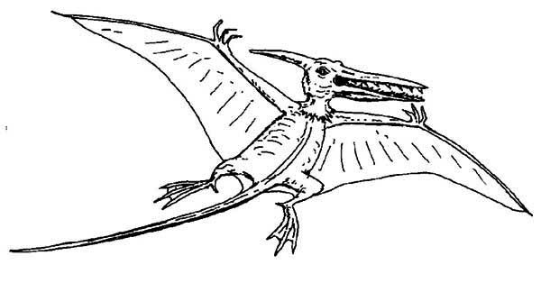 Pteranodon, : Pteranodon with Sharp Teeth Coloring Page