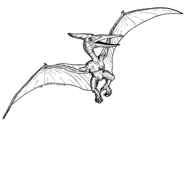 Pteranodon, : Pterosaur Pteranodon Coloring Page