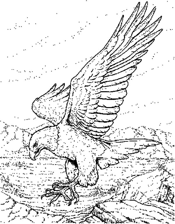 Eagle, : Sketch of an Eagle Coloring Page