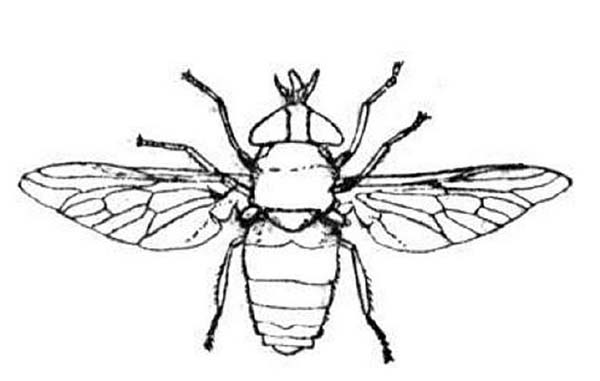 Bugs, : Special Species of Bugs Coloring Page
