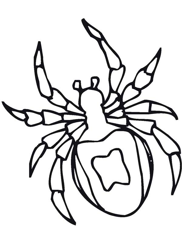 Bugs, : Species of Bugs Spider Coloring Page