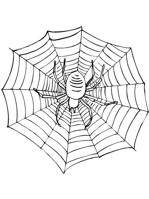Bugs, : Spider on Spidernet Species of Bugs Coloring Page