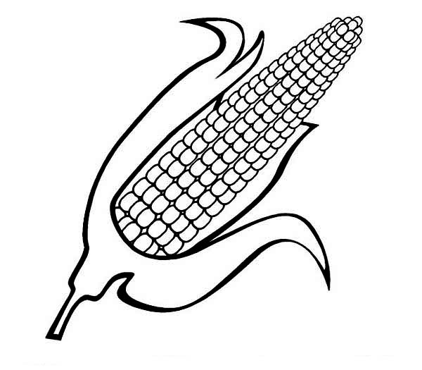 Corn, : Sweet Corn Coloring Page