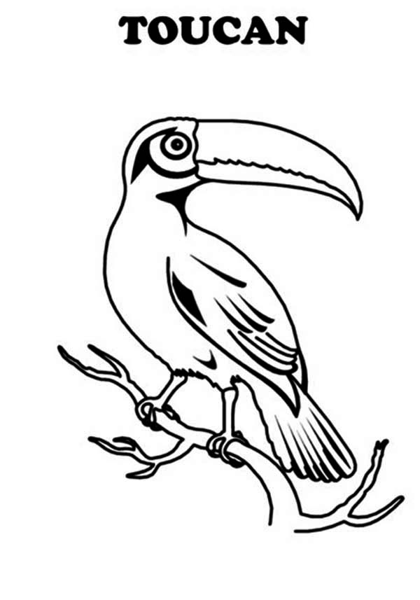 Toucan, : T is for Toucan Coloring Page