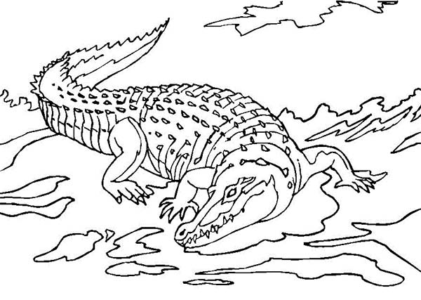 Crocodile, : Terrifying River Crocodile Coloring Page