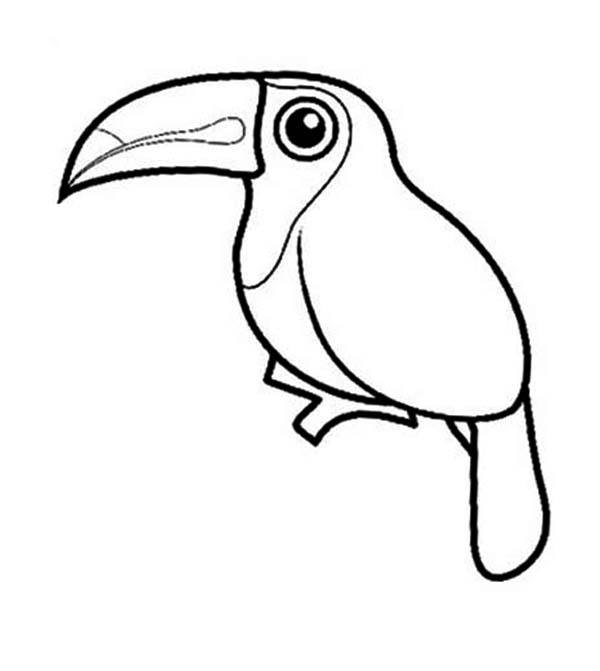 Toucan, : Toucan Coloring Page for Kids