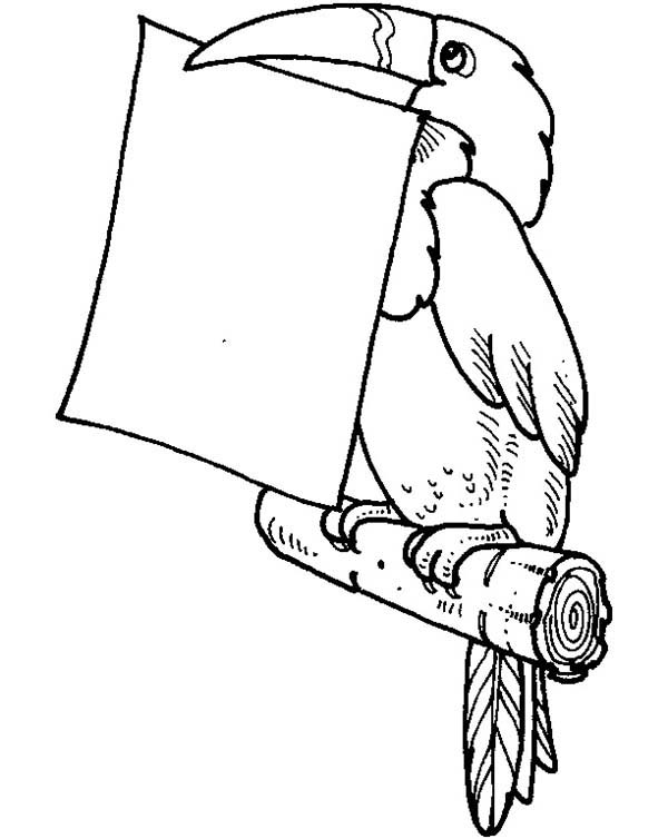 Toucan, : Toucan Holding a Piece of Paper Coloring Page