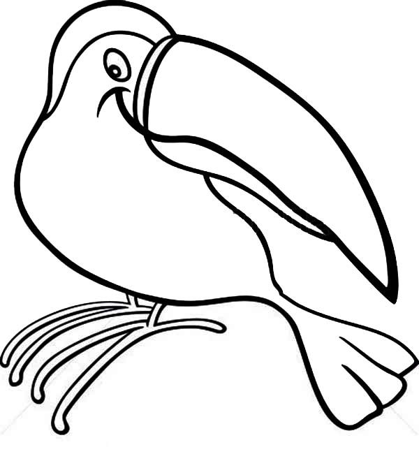 Toucan, : Toucan Outline Coloring Page