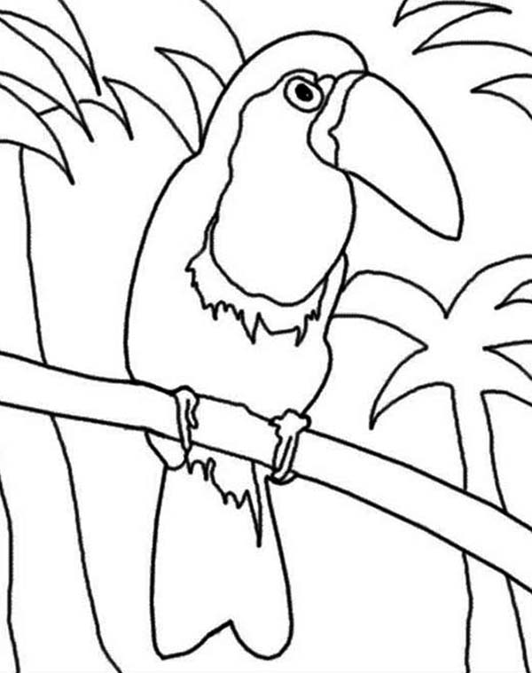 Toucan, : Toucan in the Jungle Coloring Page