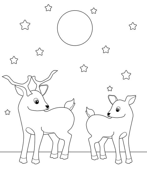 Deer, : Two Deer Fawn Under Starry Sky Coloring Page