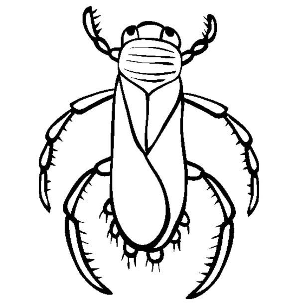 Bugs, : Water Bugs Coloring Page