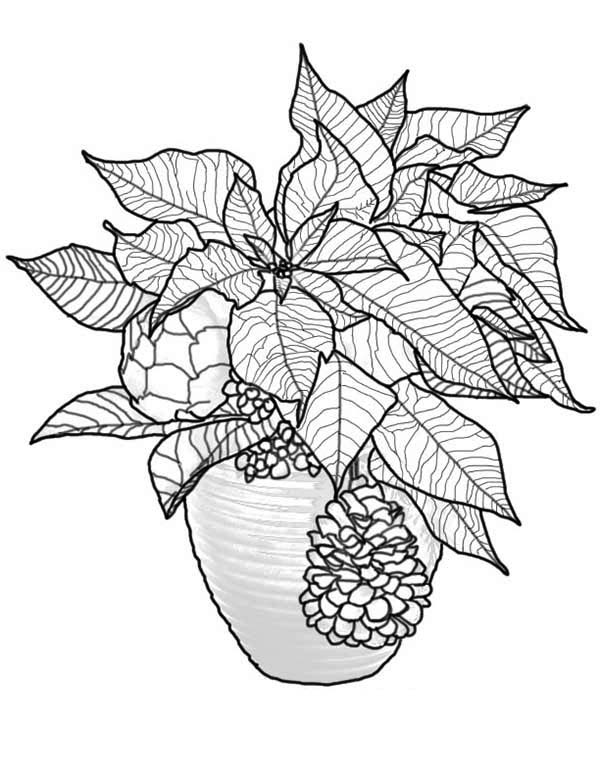Poinsettia Day, : Christmas Poinsettia for Poinsettia Day Coloring Page