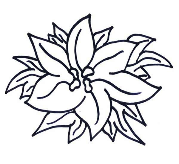 Poinsettia Day, : Happy New Year Poinsettia for Poinsettia Day Coloring Page