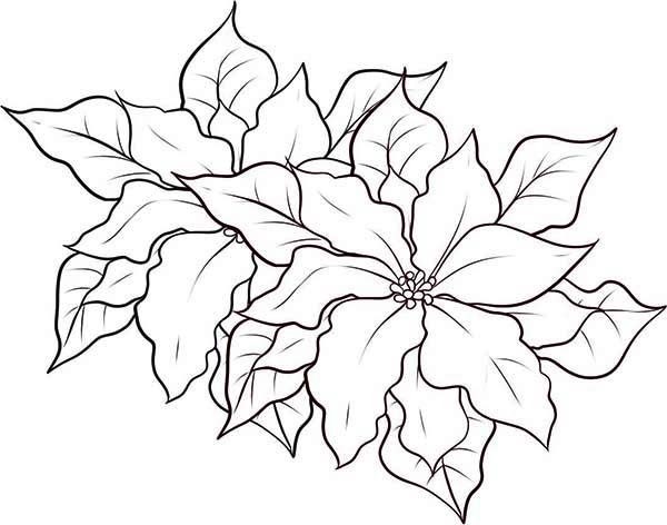 Poinsettia Day, : Poinsettia Decor for Poinsettia Day Coloring Page