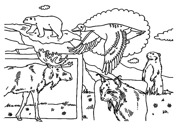 Canada Day, : A Group of Indigenous Animals on Canada Day Celebration Coloring Pages