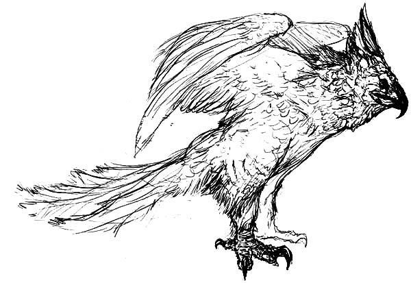 Harpy Eagle, : Amazing Animal Harpy Eagle Coloring Pages