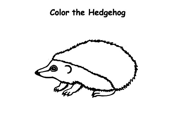 Hedgehog, : Baby Hedgehog Coloring Pages